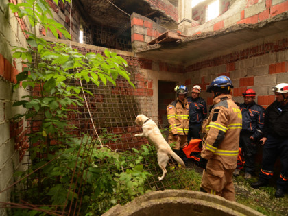 Участие на планински спасители от Групата за спасяване с кучета на ПСС при БЧК в Словения.