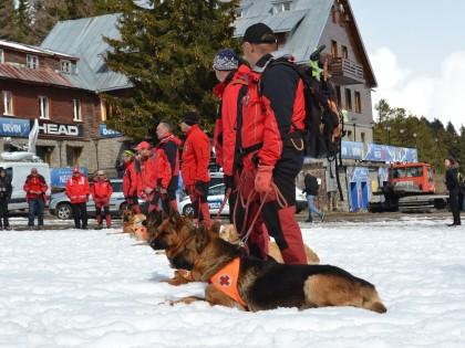 45 години работа със спасителни кучета